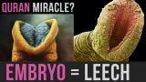 Creation of the Embryo between the Quran and Science